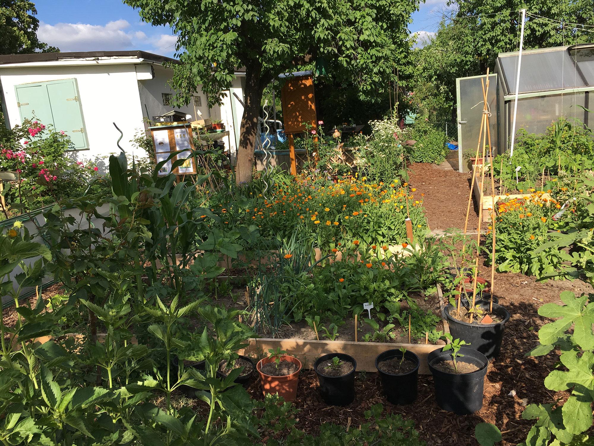 Mitmachen kann jede und jeder im Lehrgarten der Kleingartenanlage Feldblume 1915 © K. Schwahlen 2018